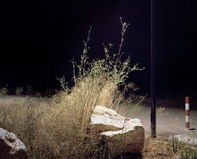grass and rock lit by electric street light oil painting