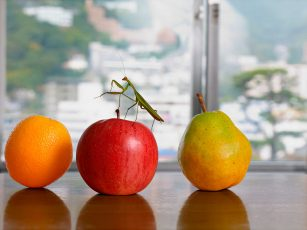 praying mantis on fruit, nearly eternal norbert schoerner cover image